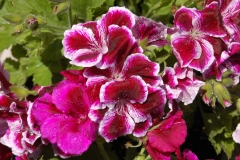 Luna-flowers 013